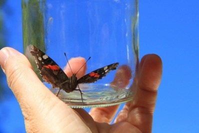 Bottle-Trapped-Glass-Hand-Butterfly-761637